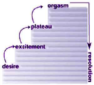 Sexual Response Cycle: Desire is Suppsed to Come First